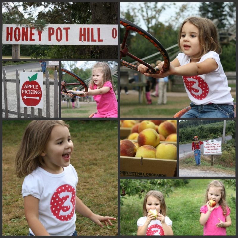 Honeypothill collage
