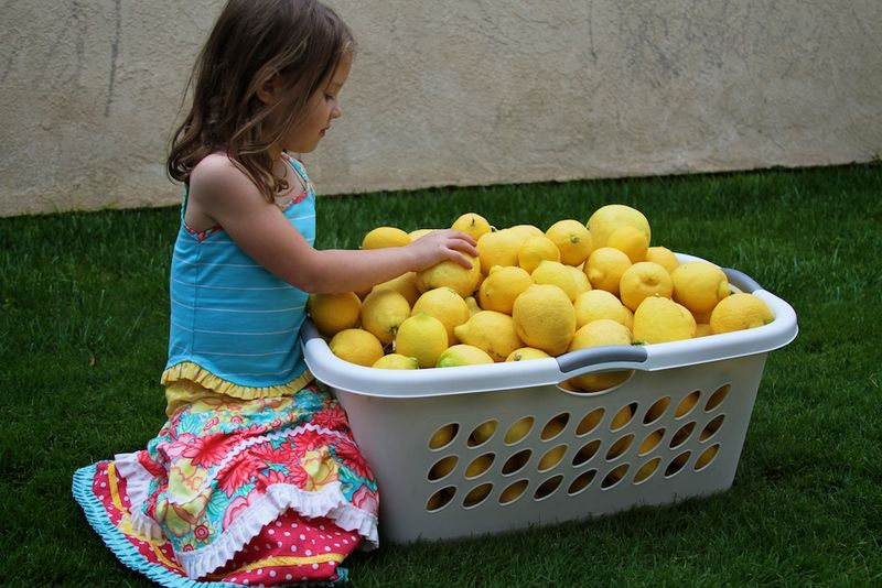 Lemon picking 128