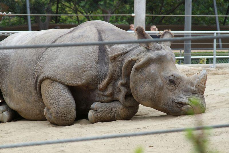 Rhino 144
